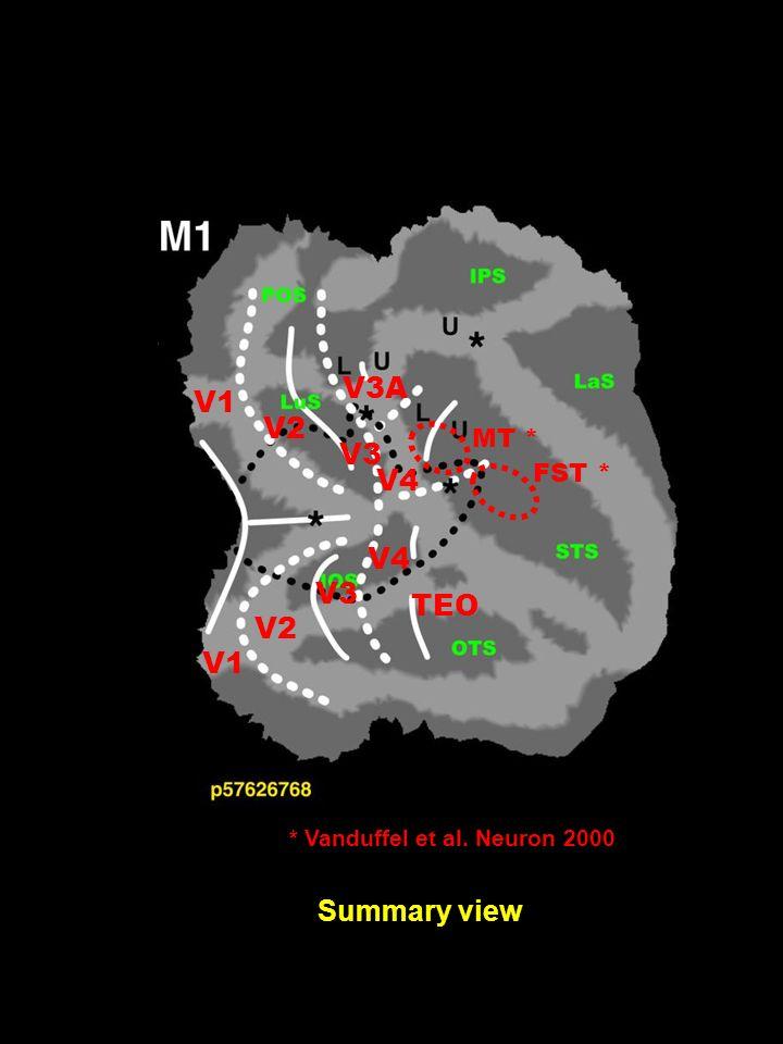 Summary view V1 V2 V3 V4 TEO V2 V3 V3A V4 MT * FST * * Vanduffel et al. Neuron 2000