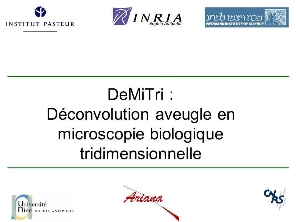 1 DeMiTri : Déconvolution aveugle en microscopie biologique tridimensionnelle Sophia Antipolis WEIZMANN INSTITUTE OF SCIENCE