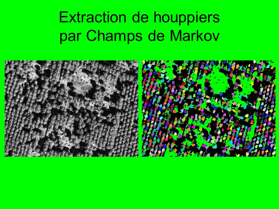 Extraction de houppiers par Champs de Markov