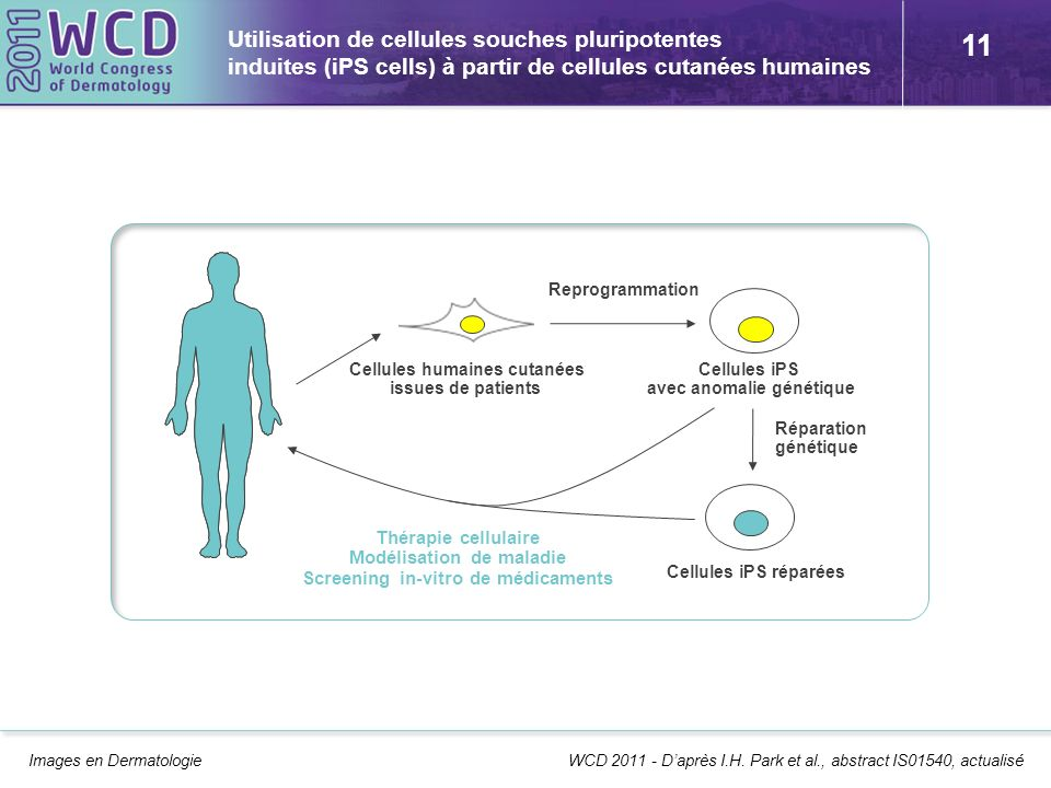 11 Utilisation de cellules souches pluripotentes induites (iPS cells) à partir de cellules cutanées humaines Images en Dermatologie WCD 2011 - Daprès