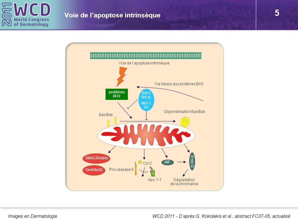 5 Voie de lapoptose intrinsèque Images en Dermatologie WCD 2011 - Daprès G. Kokolakis et al., abstract FC07-05, actualisé protéines BH3 Bcl-2 Bcl-x L