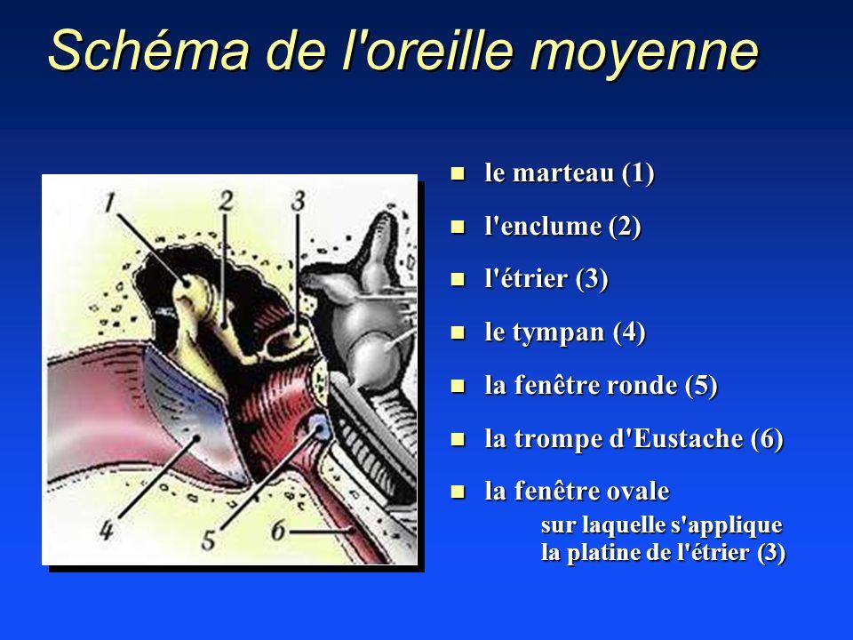 Schéma de l'oreille moyenne n le marteau (1) n l'enclume (2) n l'étrier (3) n le tympan (4) n la fenêtre ronde (5) n la trompe d'Eustache (6) n la fen