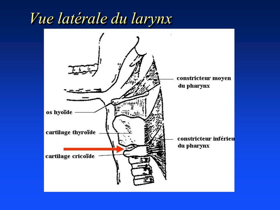 Vue latérale du larynx