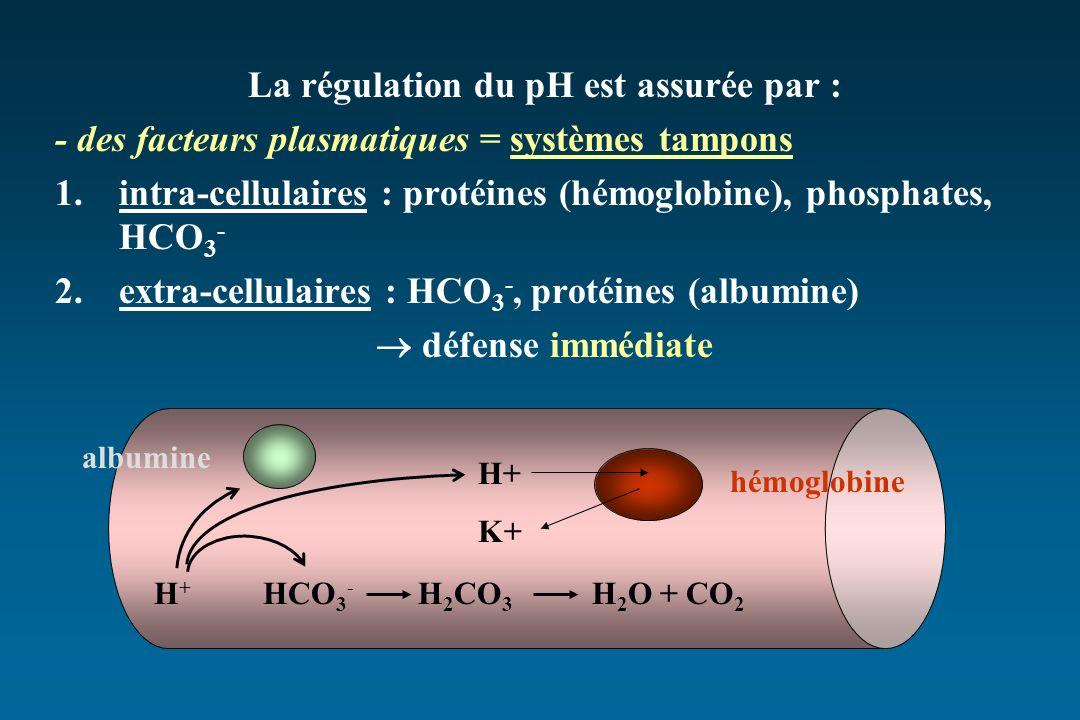 La régulation du pH est assurée par : - des facteurs plasmatiques = systèmes tampons 1.intra-cellulaires : protéines (hémoglobine), phosphates, HCO 3 - 2.extra-cellulaires : HCO 3 -, protéines (albumine) défense immédiate H + HCO 3 - H 2 CO 3 H 2 O + CO 2 H+ K+ hémoglobine albumine