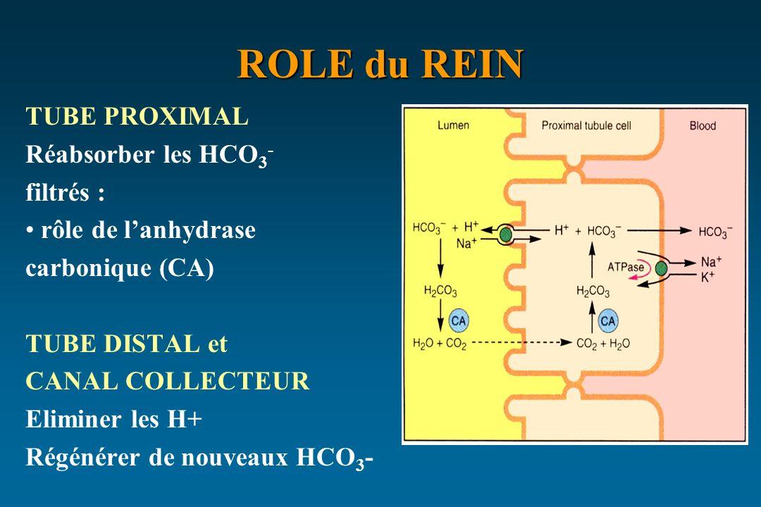 ROLE du REIN TUBE PROXIMAL Réabsorber les HCO 3 - filtrés : rôle de lanhydrase carbonique (CA) TUBE DISTAL et CANAL COLLECTEUR Eliminer les H+ Régénér