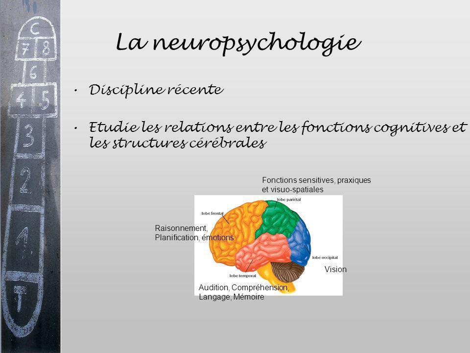 La neuropsychologie Discipline récente Etudie les relations entre les fonctions cognitives et les structures cérébrales Raisonnement, Planification, é