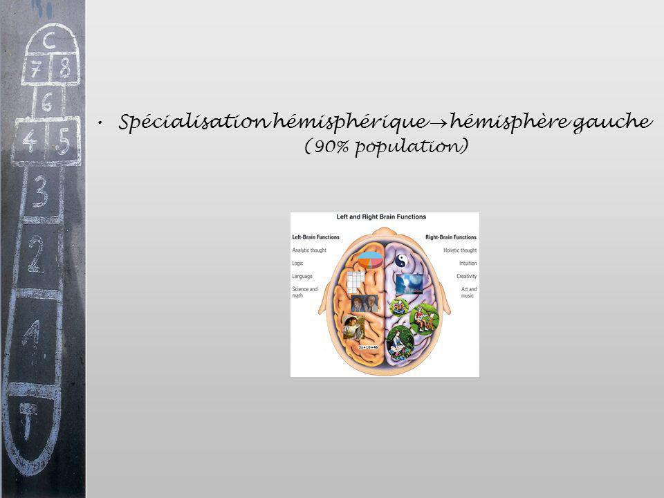 Spécialisation hémisphérique hémisphère gauche (90% population)