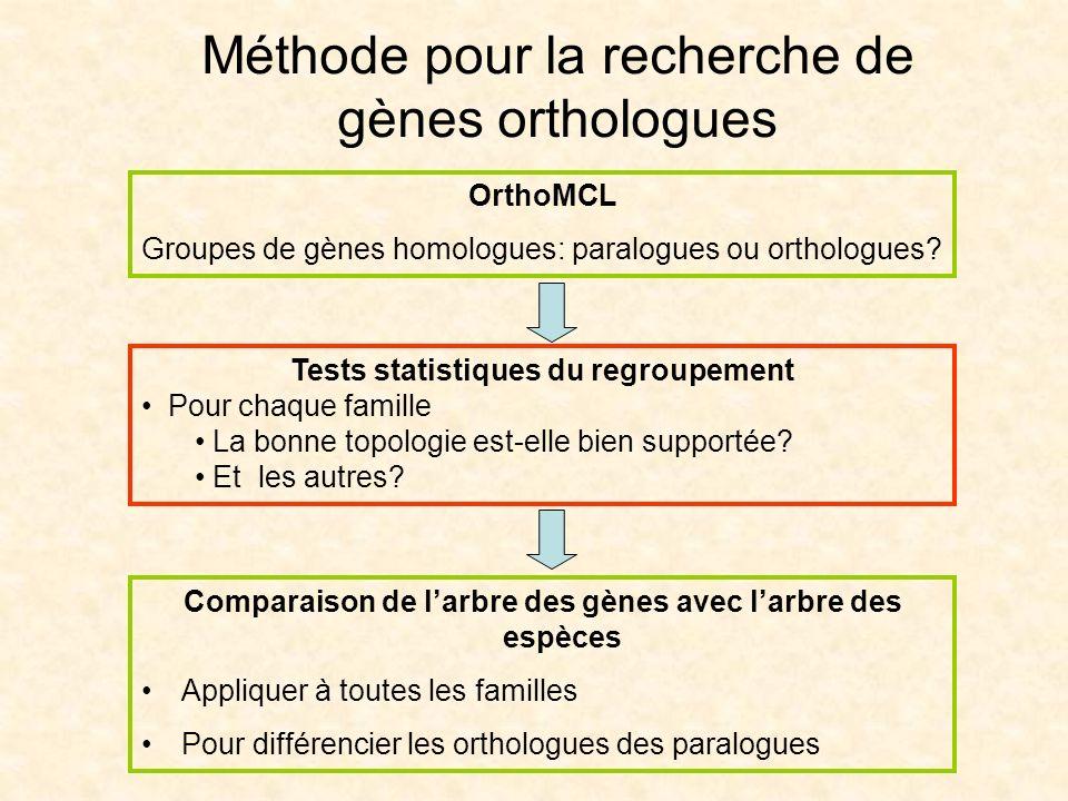 Méthode pour la recherche de gènes orthologues OrthoMCL Groupes de gènes homologues: paralogues ou orthologues? Comparaison de larbre des gènes avec l