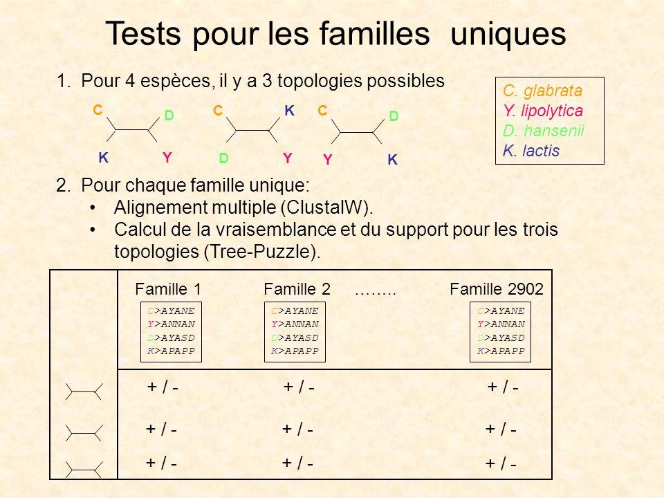 Tests pour les familles uniques DY KC KY D C YK D C 1.Pour 4 espèces, il y a 3 topologies possibles 2.Pour chaque famille unique: Alignement multiple