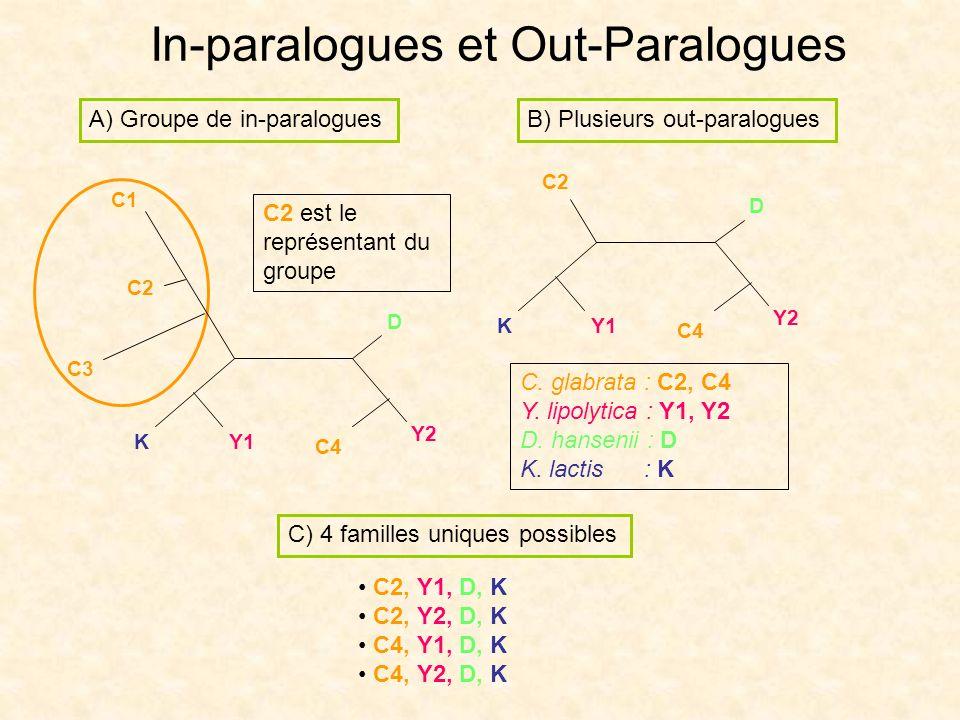 In-paralogues et Out-Paralogues C1 C2 C3 K Y2 D A) Groupe de in-paralogues C2 est le représentant du groupe B) Plusieurs out-paralogues Y1 C4 K Y2 D Y
