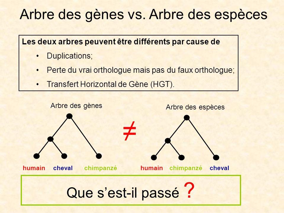 Les deux arbres peuvent être différents par cause de Duplications; Perte du vrai orthologue mais pas du faux orthologue; Transfert Horizontal de Gène