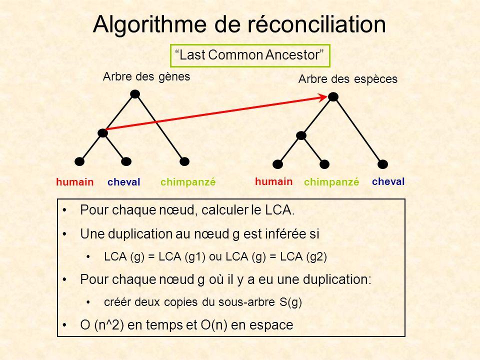 Algorithme de réconciliation Pour chaque nœud, calculer le LCA. Une duplication au nœud g est inférée si LCA (g) = LCA (g1) ou LCA (g) = LCA (g2) Pour