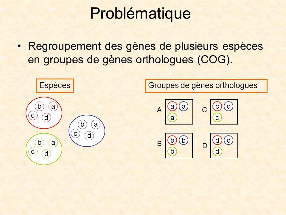 Regroupement des gènes de plusieurs espèces en groupes de gènes orthologues (COG). ba d c ba d c ba d c bb b B aa a A cc c C dd d D Espèces Groupes de