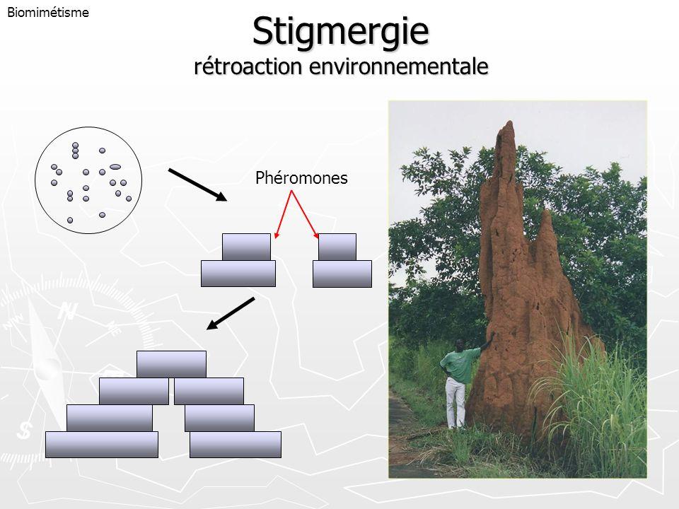 Stigmergie rétroaction environnementale Biomimétisme Phéromones