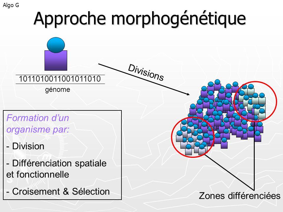 Approche morphogénétique Algo G 1011010011001011010 Divisions Zones différenciées Formation dun organisme par: - Division - Différenciation spatiale e