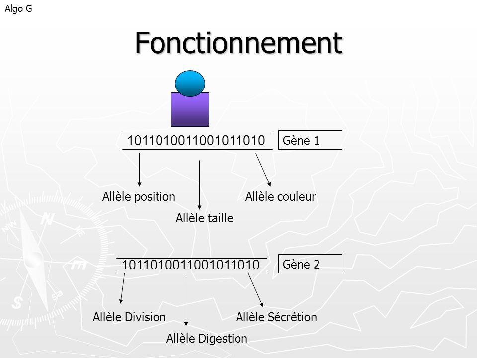 Fonctionnement Algo G 1011010011001011010 Allèle positionAllèle couleur Allèle taille 1011010011001011010 Allèle DivisionAllèle Sécrétion Allèle Diges