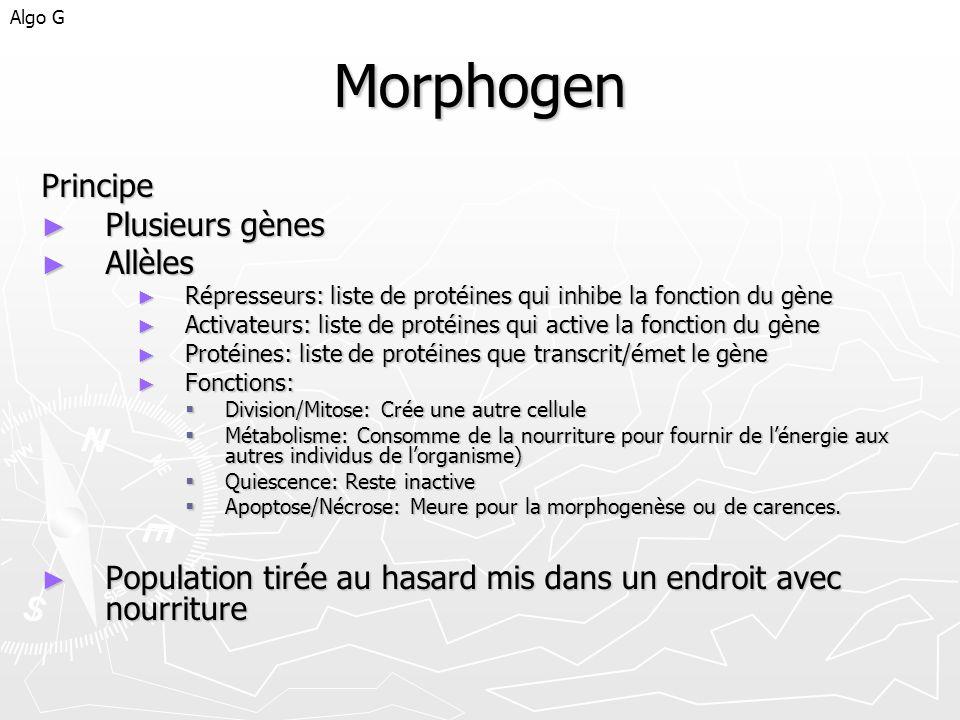 Morphogen Principe Plusieurs gènes Plusieurs gènes Allèles Allèles Répresseurs: liste de protéines qui inhibe la fonction du gène Répresseurs: liste d
