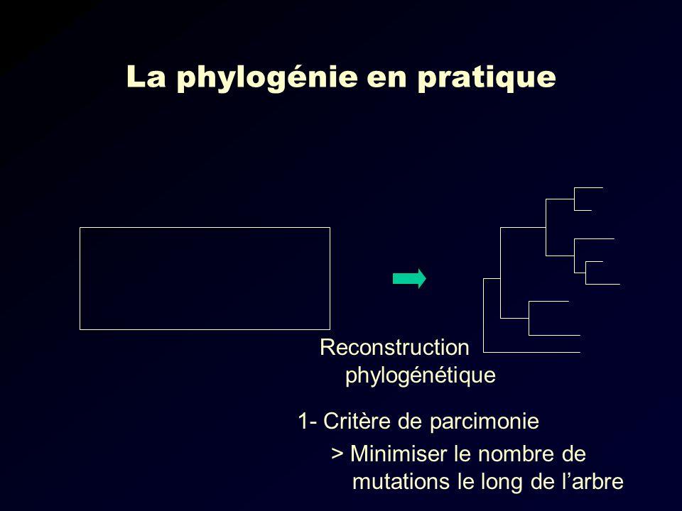 La phylogénie en pratique Reconstruction phylogénétique 1- Critère de parcimonie > Minimiser le nombre de mutations le long de larbre
