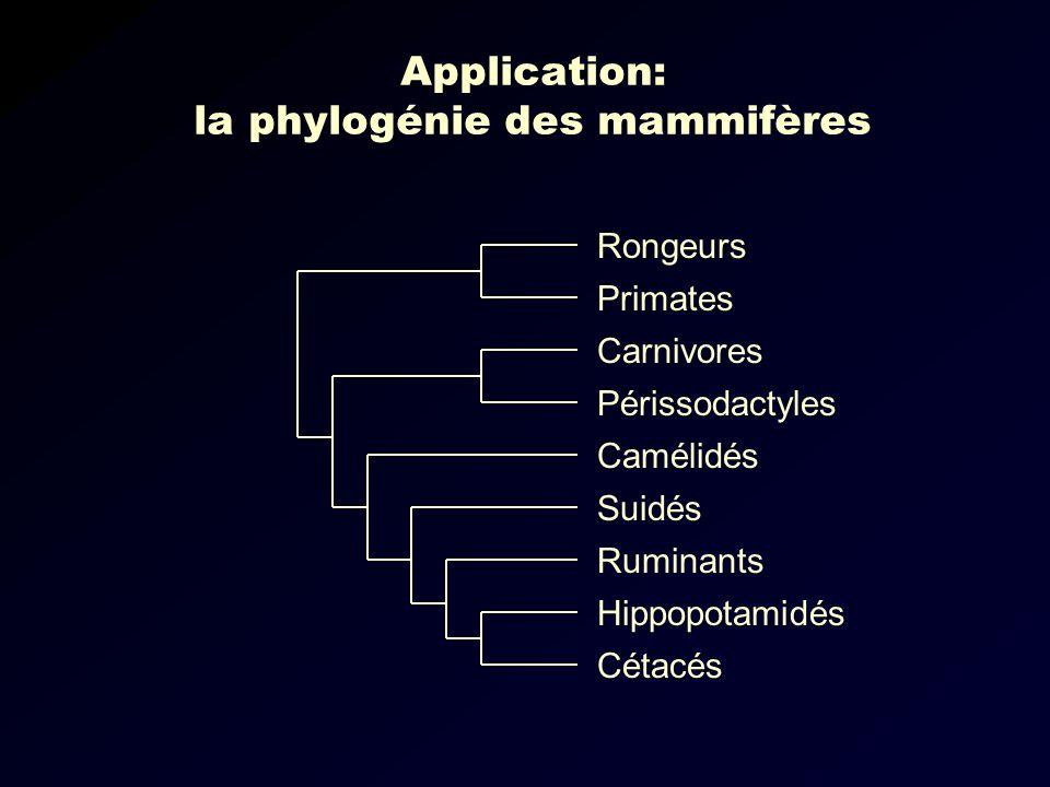 Application: la phylogénie des mammifères Carnivores Périssodactyles Camélidés Suidés Ruminants Hippopotamidés Cétacés Rongeurs Primates