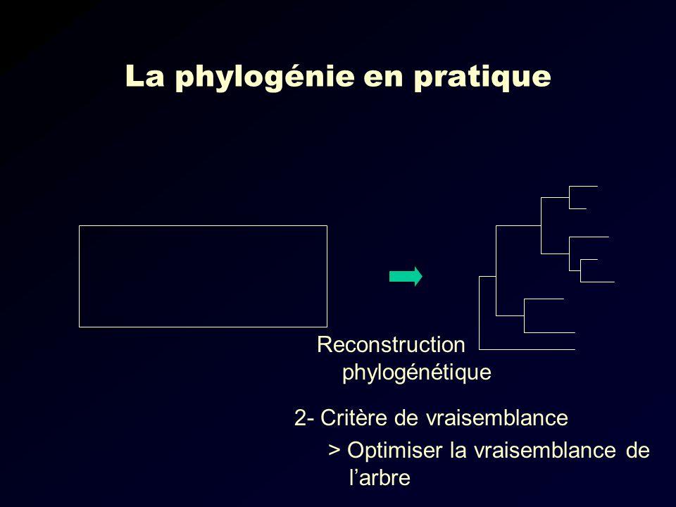 La phylogénie en pratique Reconstruction phylogénétique 2- Critère de vraisemblance > Optimiser la vraisemblance de larbre