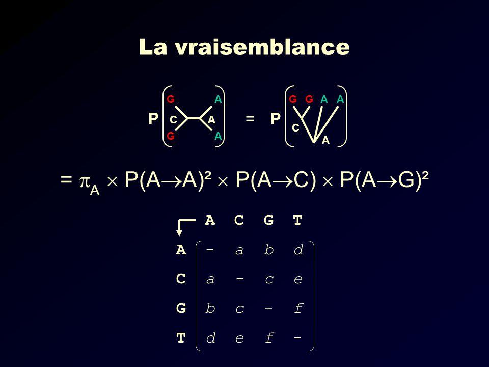 = A P(A A)² P(A C) P(A G)² G G A A CA P GGAA C A P= La vraisemblance A C G T A - a b d C a - c e G b c - f T d e f -