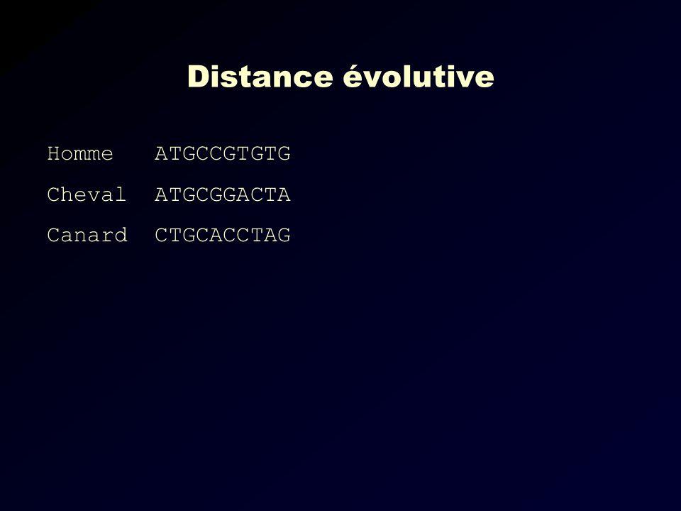 Distance évolutive Homme ATGCCGTGTG Cheval ATGCGGACTA Canard CTGCACCTAG