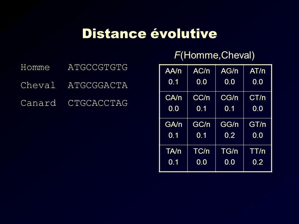Distance évolutive AA/n 0.1 AC/n 0.0 AG/n 0.0 AT/n 0.0 CA/n 0.0 CC/n 0.1 CG/n 0.1 CT/n 0.0 GA/n 0.1 GC/n 0.1 GG/n 0.2 GT/n 0.0 TA/n 0.1 TC/n 0.0 TG/n 0.0 TT/n 0.2 F(Homme,Cheval) Homme ATGCCGTGTG Cheval ATGCGGACTA Canard CTGCACCTAG