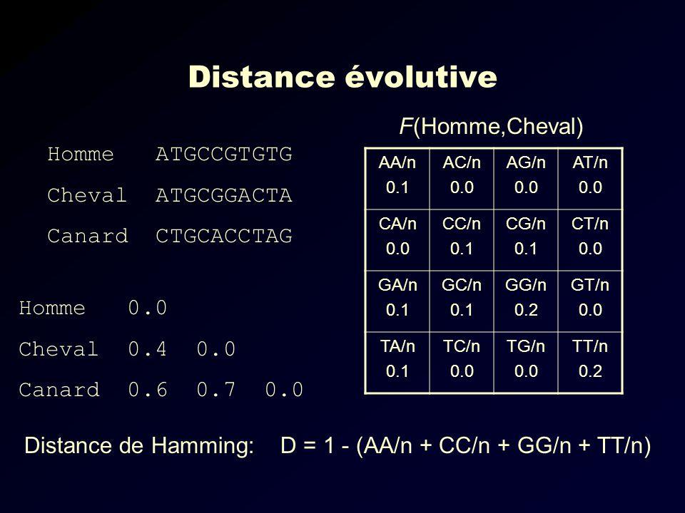 Distance évolutive Homme ATGCCGTGTG Cheval ATGCGGACTA Canard CTGCACCTAG AA/n 0.1 AC/n 0.0 AG/n 0.0 AT/n 0.0 CA/n 0.0 CC/n 0.1 CG/n 0.1 CT/n 0.0 GA/n 0.1 GC/n 0.1 GG/n 0.2 GT/n 0.0 TA/n 0.1 TC/n 0.0 TG/n 0.0 TT/n 0.2 F(Homme,Cheval) Homme 0.0 Cheval 0.4 0.0 Canard 0.6 0.7 0.0 Distance de Hamming: D = 1 - (AA/n + CC/n + GG/n + TT/n)
