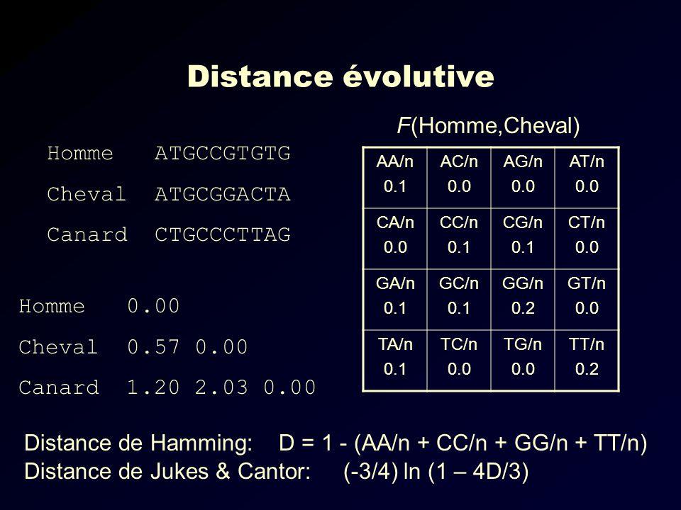 Distance évolutive Homme ATGCCGTGTG Cheval ATGCGGACTA Canard CTGCCCTTAG AA/n 0.1 AC/n 0.0 AG/n 0.0 AT/n 0.0 CA/n 0.0 CC/n 0.1 CG/n 0.1 CT/n 0.0 GA/n 0.1 GC/n 0.1 GG/n 0.2 GT/n 0.0 TA/n 0.1 TC/n 0.0 TG/n 0.0 TT/n 0.2 F(Homme,Cheval) Homme 0.00 Cheval 0.57 0.00 Canard 1.20 2.03 0.00 Distance de Jukes & Cantor: (-3/4) ln (1 – 4D/3) Distance de Hamming: D = 1 - (AA/n + CC/n + GG/n + TT/n)