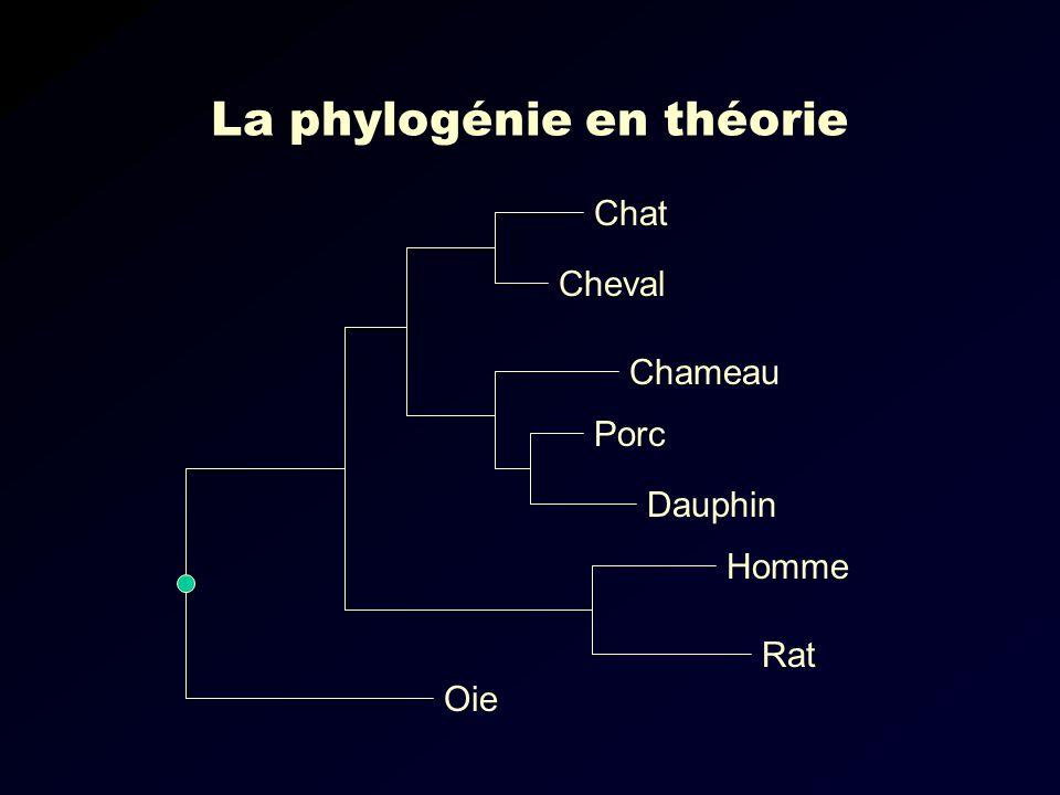 La phylogénie en théorie Oie Rat Homme Chat Porc Dauphin Cheval Chameau