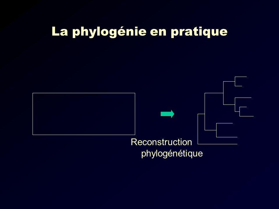 La phylogénie en pratique Reconstruction phylogénétique