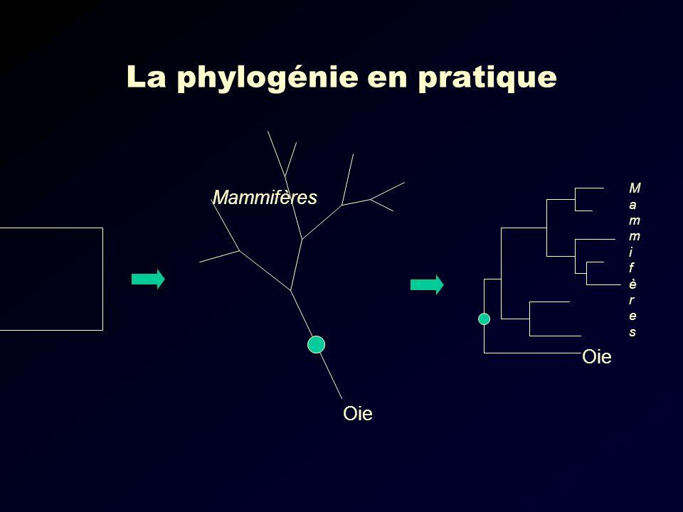 La phylogénie en pratique Oie Mammifères MammifèresMammifères