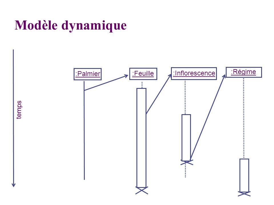 :Palmier :Feuille :Inflorescence :Régime temps Modèle dynamique