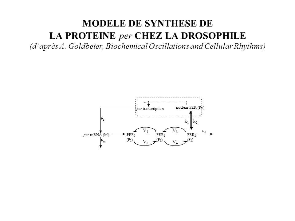 SYNTHESE DE LA PROTEINE per CHEZ LA DROSOPHILE MODELE MATHEMATIQUE (daprès A.