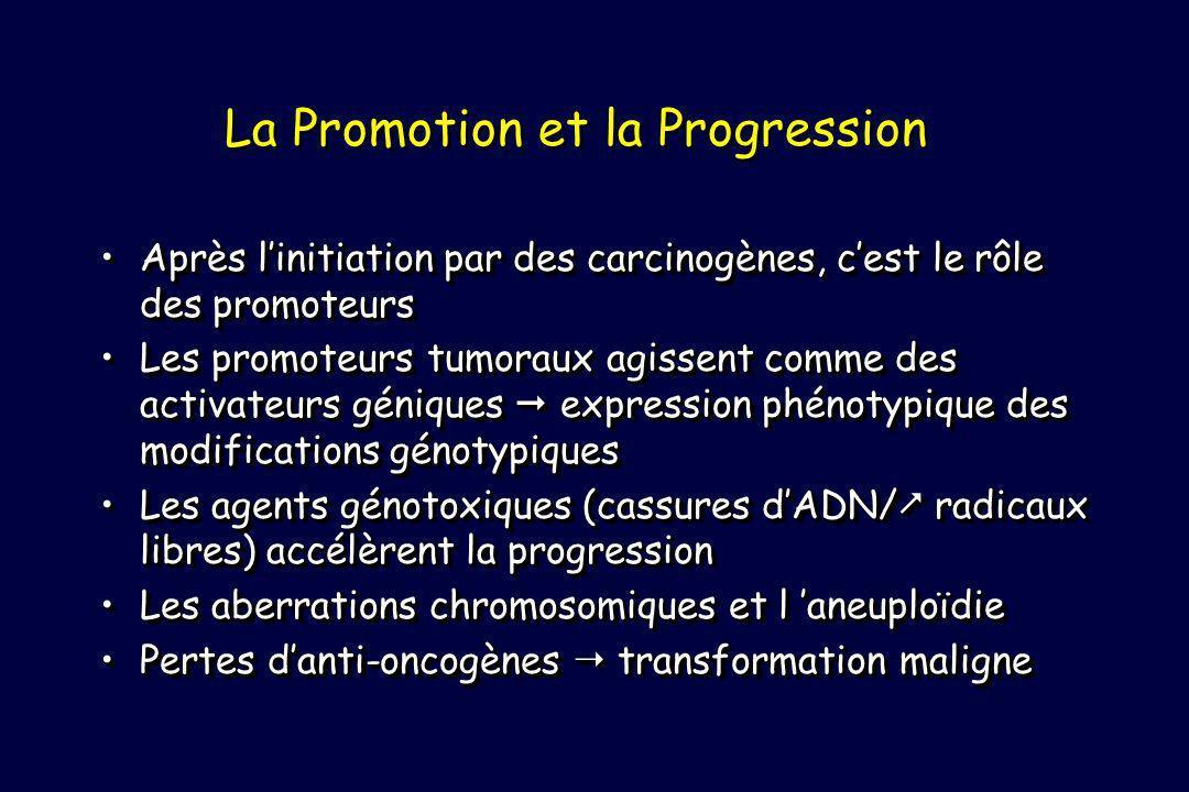 La Promotion et la Progression Après linitiation par des carcinogènes, cest le rôle des promoteursAprès linitiation par des carcinogènes, cest le rôle des promoteurs Les promoteurs tumoraux agissent comme des activateurs géniques expression phénotypique des modifications génotypiquesLes promoteurs tumoraux agissent comme des activateurs géniques expression phénotypique des modifications génotypiques Les agents génotoxiques (cassures dADN/ radicaux libres) accélèrent la progressionLes agents génotoxiques (cassures dADN/ radicaux libres) accélèrent la progression Les aberrations chromosomiques et l aneuploïdieLes aberrations chromosomiques et l aneuploïdie Pertes danti-oncogènes transformation malignePertes danti-oncogènes transformation maligne Après linitiation par des carcinogènes, cest le rôle des promoteursAprès linitiation par des carcinogènes, cest le rôle des promoteurs Les promoteurs tumoraux agissent comme des activateurs géniques expression phénotypique des modifications génotypiquesLes promoteurs tumoraux agissent comme des activateurs géniques expression phénotypique des modifications génotypiques Les agents génotoxiques (cassures dADN/ radicaux libres) accélèrent la progressionLes agents génotoxiques (cassures dADN/ radicaux libres) accélèrent la progression Les aberrations chromosomiques et l aneuploïdieLes aberrations chromosomiques et l aneuploïdie Pertes danti-oncogènes transformation malignePertes danti-oncogènes transformation maligne
