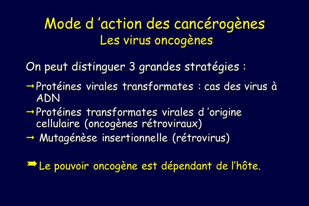 Mode d action des cancérogènes Les virus oncogènes On peut distinguer 3 grandes stratégies : Protéines virales transformates : cas des virus à ADN Protéines transformates virales d origine cellulaire (oncogènes rétroviraux) Mutagénèse insertionnelle (rétrovirus) Le pouvoir oncogène est dépendant de lhôte.