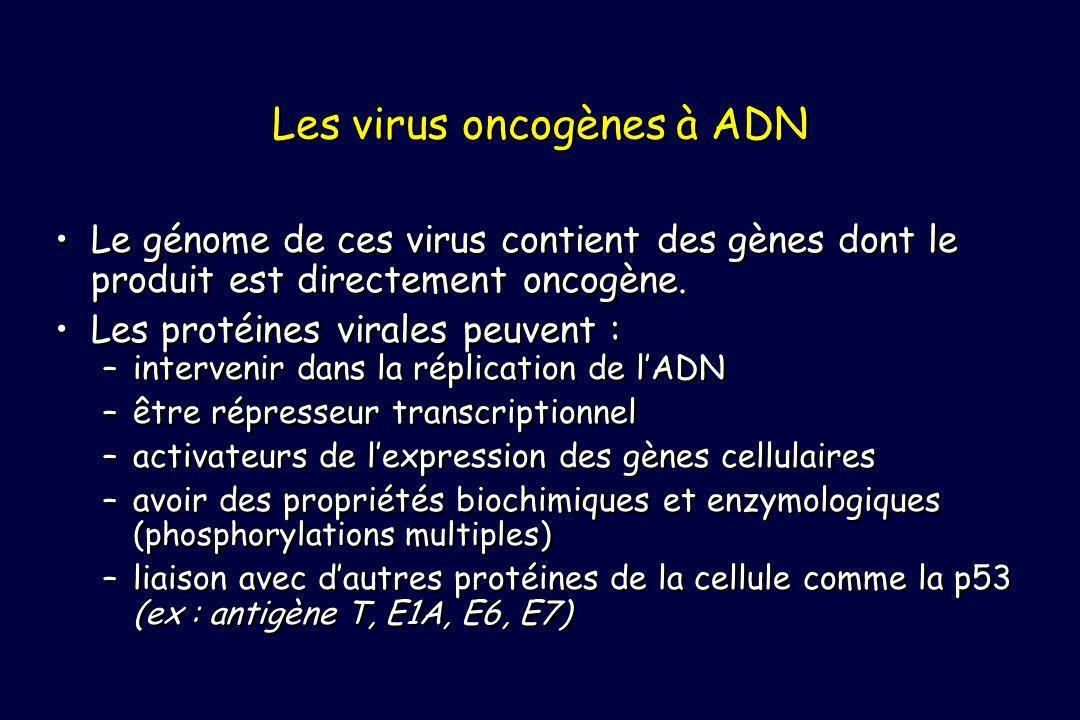 Les virus oncogènes à ADN Le génome de ces virus contient des gènes dont le produit est directement oncogène. Les protéines virales peuvent : –interve