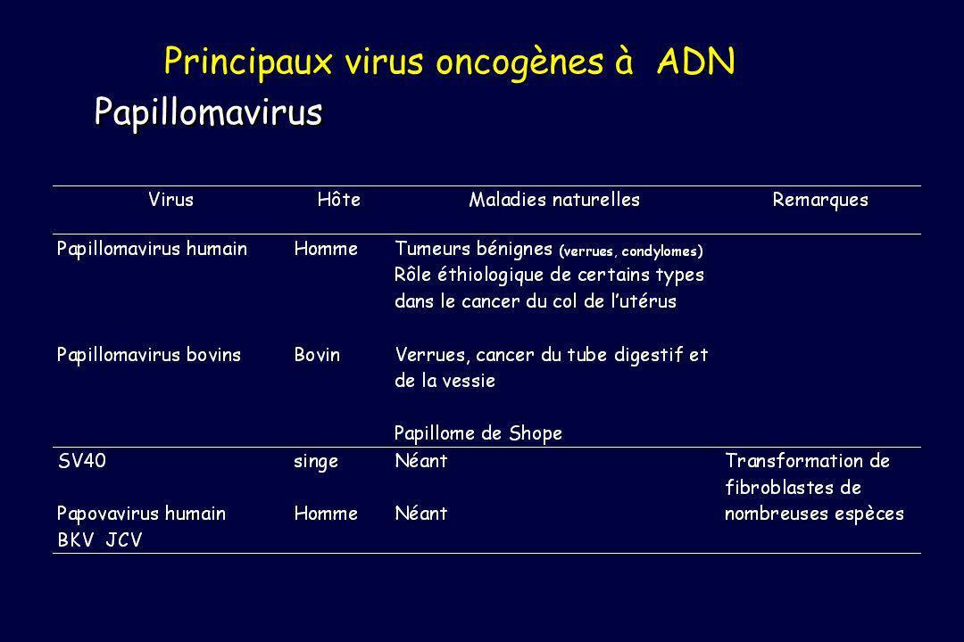 Principaux virus oncogènes à ADN Papillomavirus