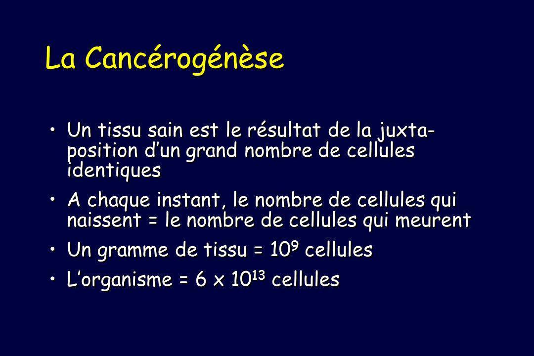 La Cancérogénèse Un tissu sain est le résultat de la juxta- position dun grand nombre de cellules identiques A chaque instant, le nombre de cellules qui naissent = le nombre de cellules qui meurent Un gramme de tissu = 10 9 cellules Lorganisme = 6 x 10 13 cellules Un tissu sain est le résultat de la juxta- position dun grand nombre de cellules identiques A chaque instant, le nombre de cellules qui naissent = le nombre de cellules qui meurent Un gramme de tissu = 10 9 cellules Lorganisme = 6 x 10 13 cellules