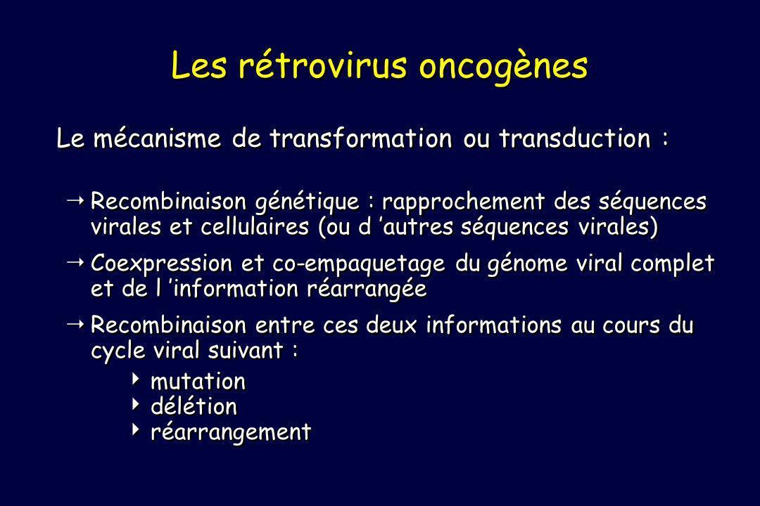 Recombinaison génétique : rapprochement des séquences virales et cellulaires (ou d autres séquences virales) Coexpression et co-empaquetage du génome viral complet et de l information réarrangée Recombinaison entre ces deux informations au cours du cycle viral suivant : mutation délétion réarrangement Recombinaison génétique : rapprochement des séquences virales et cellulaires (ou d autres séquences virales) Coexpression et co-empaquetage du génome viral complet et de l information réarrangée Recombinaison entre ces deux informations au cours du cycle viral suivant : mutation délétion réarrangement Les rétrovirus oncogènes Le mécanisme de transformation ou transduction :