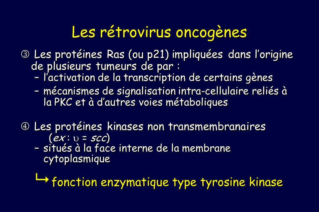 Les protéines Ras (ou p21) impliquées dans lorigine de plusieurs tumeurs de par : –lactivation de la transcription de certains gènes –mécanismes de signalisation intra-cellulaire reliés à la PKC et à dautres voies métaboliques Les protéines kinases non transmembranaires (ex : = scc) –situés à la face interne de la membrane cytoplasmique fonction enzymatique type tyrosine kinase Les protéines Ras (ou p21) impliquées dans lorigine de plusieurs tumeurs de par : –lactivation de la transcription de certains gènes –mécanismes de signalisation intra-cellulaire reliés à la PKC et à dautres voies métaboliques Les protéines kinases non transmembranaires (ex : = scc) –situés à la face interne de la membrane cytoplasmique fonction enzymatique type tyrosine kinase Les rétrovirus oncogènes