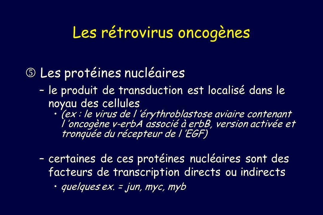 Les protéines nucléaires Les protéines nucléaires –le produit de transduction est localisé dans le noyau des cellules (ex : le virus de l érythroblastose aviaire contenant l oncogène v-erbA associé à erbB, version activée et tronquée du récepteur de l EGF)(ex : le virus de l érythroblastose aviaire contenant l oncogène v-erbA associé à erbB, version activée et tronquée du récepteur de l EGF) –certaines de ces protéines nucléaires sont des facteurs de transcription directs ou indirects quelques ex.