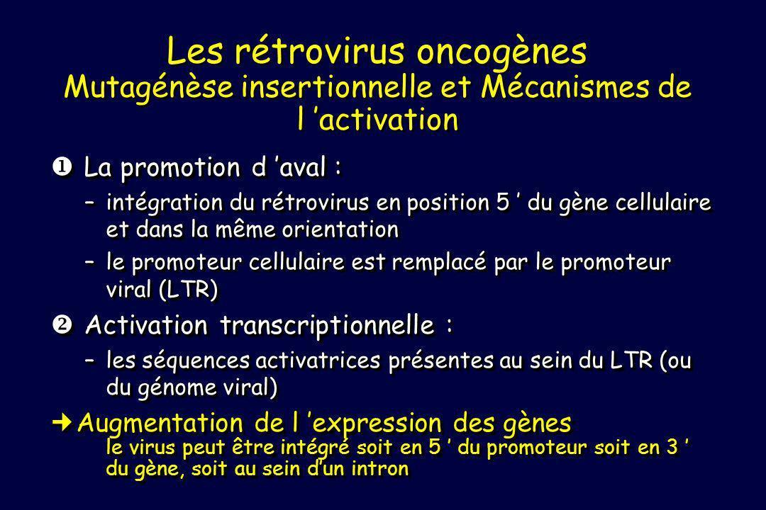 La promotion d aval : La promotion d aval : –intégration du rétrovirus en position 5 du gène cellulaire et dans la même orientation –le promoteur cell