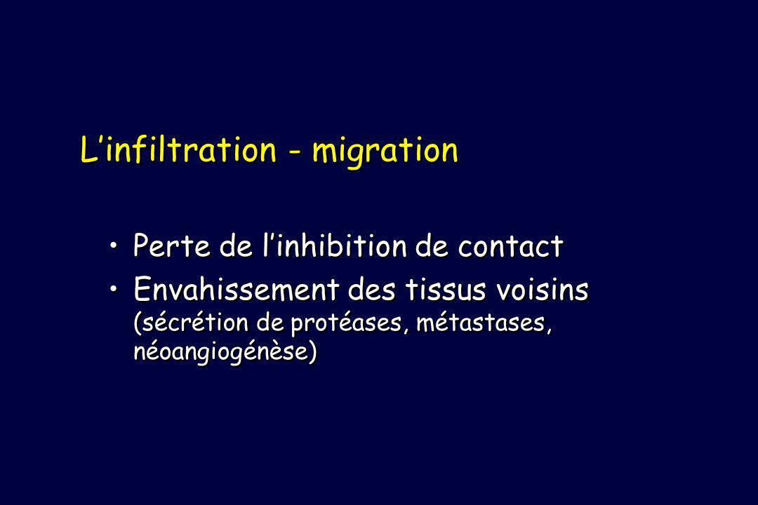 Linfiltration - migration Perte de linhibition de contact Envahissement des tissus voisins (sécrétion de protéases, métastases, néoangiogénèse) Perte de linhibition de contact Envahissement des tissus voisins (sécrétion de protéases, métastases, néoangiogénèse)