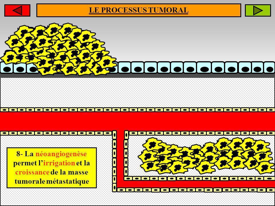 LE PROCESSUS TUMORAL 8- La néoangiogenèse permet lirrigation et la croissance de la masse tumorale métastatique