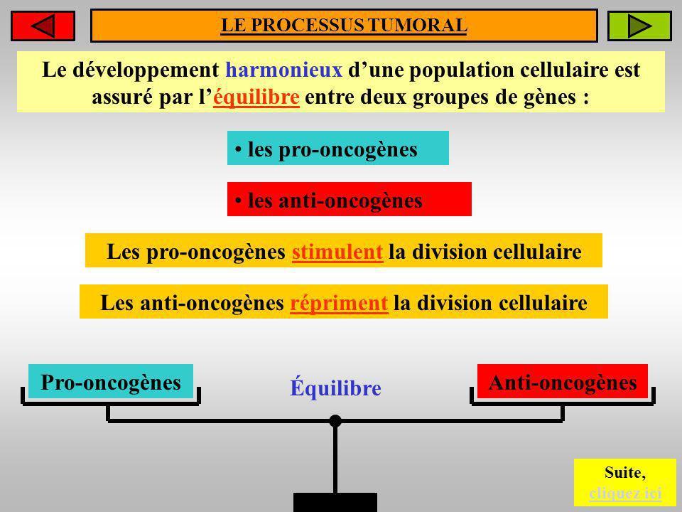 LE PROCESSUS TUMORAL Le développement harmonieux dune population cellulaire est assuré par léquilibre entre deux groupes de gènes : les pro-oncogènes