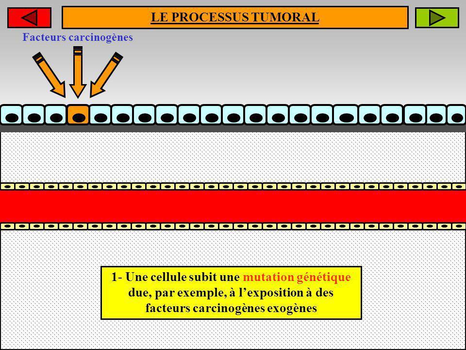 LE PROCESSUS TUMORAL 1- Une cellule subit une mutation génétique due, par exemple, à lexposition à des facteurs carcinogènes exogènes Facteurs carcino