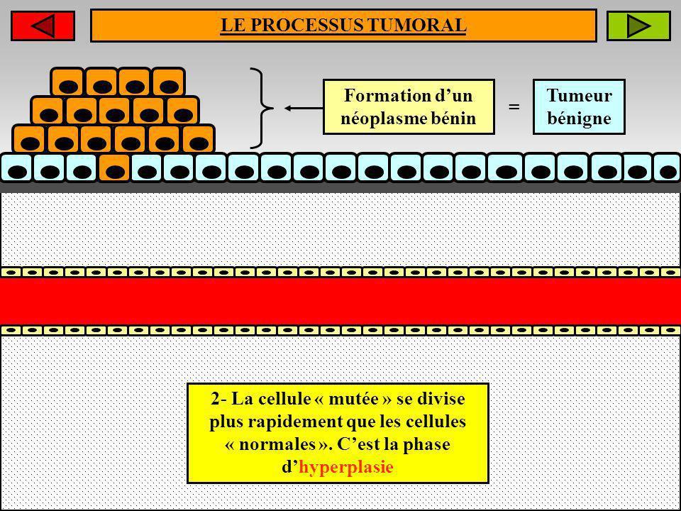 LE PROCESSUS TUMORAL Formation dun néoplasme bénin = Tumeur bénigne 2- La cellule « mutée » se divise plus rapidement que les cellules « normales ». C