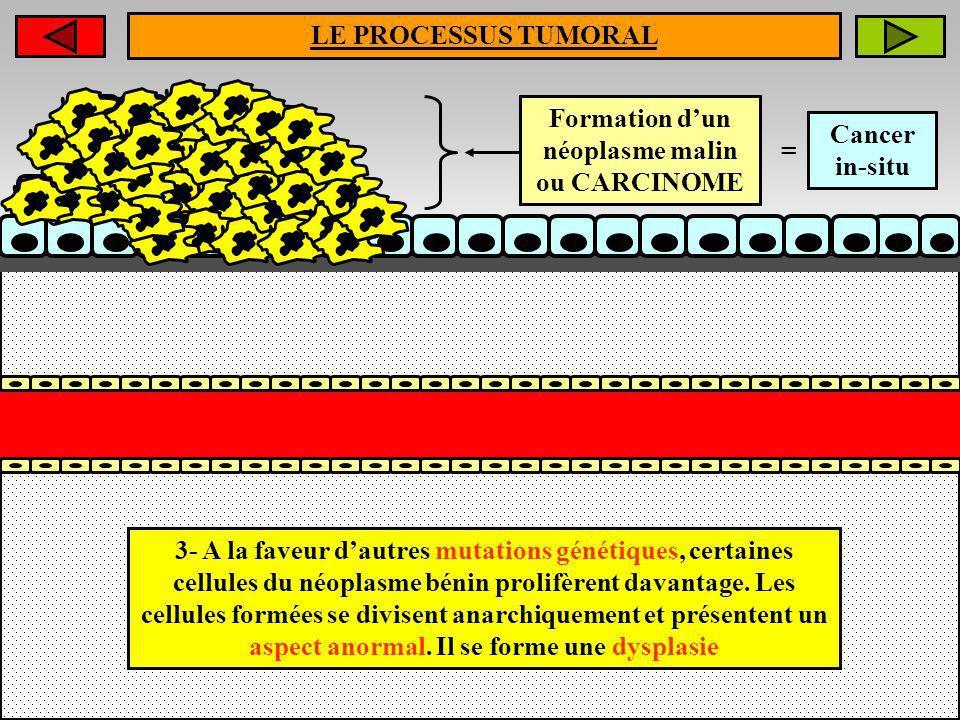LE PROCESSUS TUMORAL 3- A la faveur dautres mutations génétiques, certaines cellules du néoplasme bénin prolifèrent davantage. Les cellules formées se