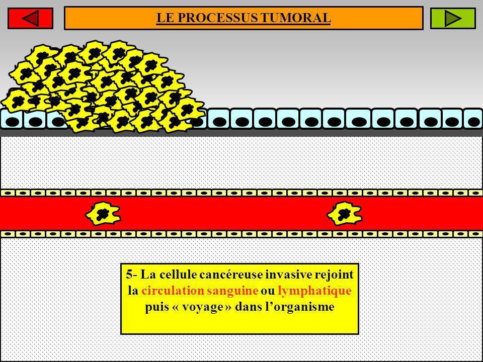 5- La cellule cancéreuse invasive rejoint la circulation sanguine ou lymphatique puis « voyage » dans lorganisme